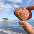 Photos: yamanao999_2793