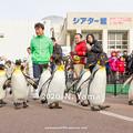 Photos: オウサマペンギン