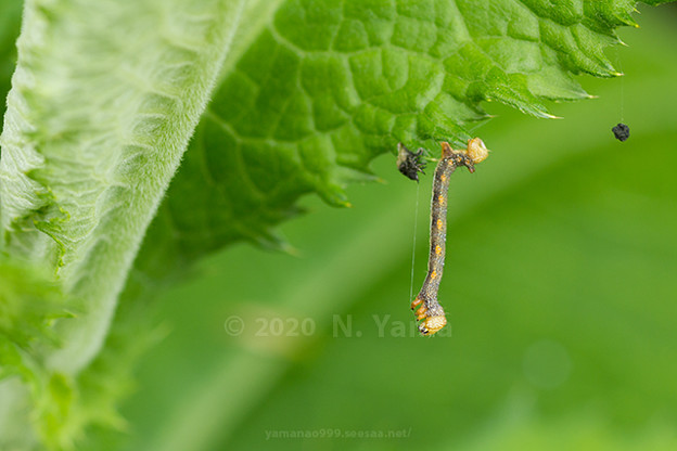 yamanao999_insect2020_024