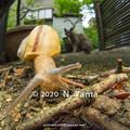 Photos: カタツムリの一種