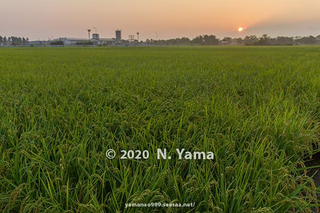 2020年8月22日、田園風景