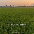 Photos: 2020年8月22日、田園風景