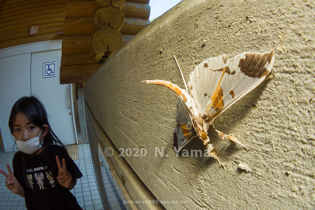 Photos: yamanao999_insect2020_078