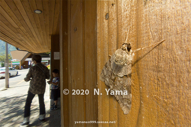 yamanao999_insect2020_077