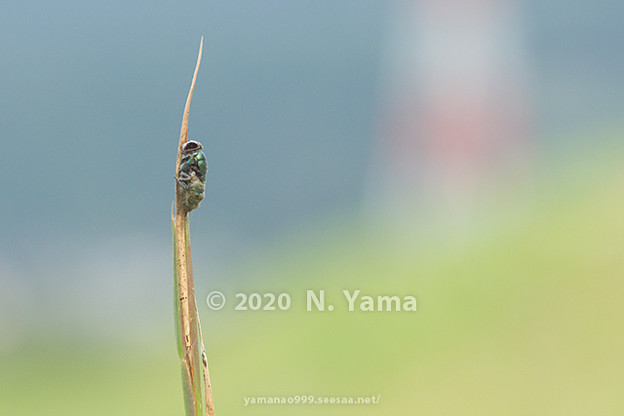 yamanao999_insect2020_079