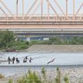 Photos: 手取川釣り風景