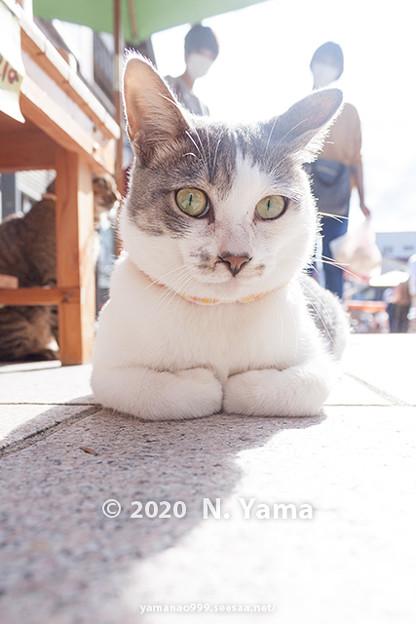 Cats_0106