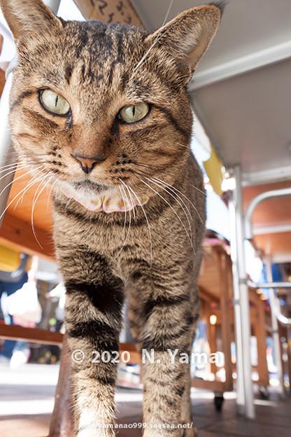 Cats_0105