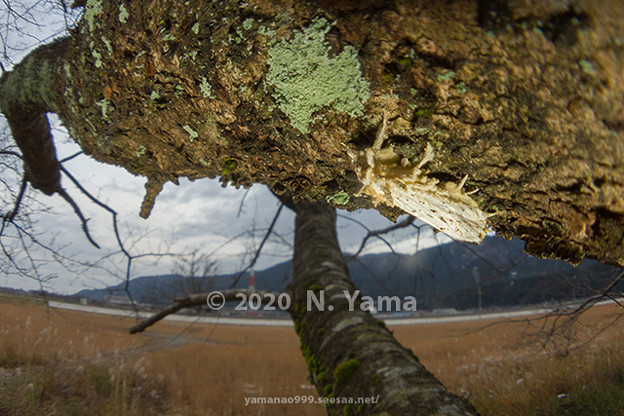 yamanao999_insect2020_096