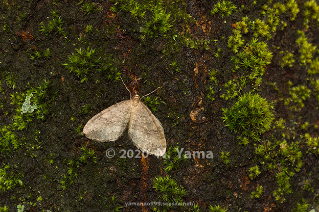 yamanao999_insect2020_094
