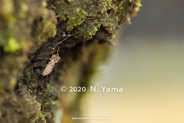 Photos: yamanao999_insect2020_093