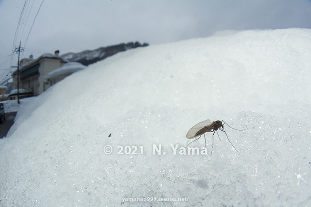 yamanao999_insect2021_001
