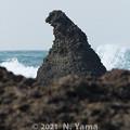 Photos: 2021年2月21日、ゴジラ岩