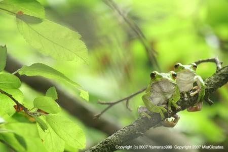 杜青蛙の世界2007 その14