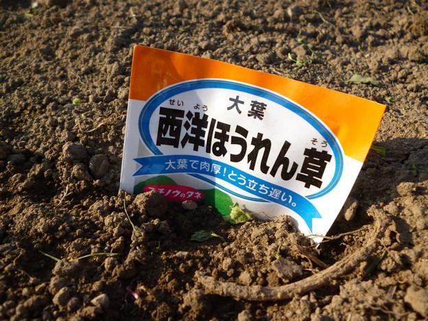 2018/04/22ほうれん草