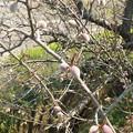 Photos: 2020/04/15春の芽吹き2