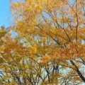 Photos: 2020/11/16富山大学