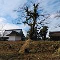 Photos: 2020/11/29勝興寺2