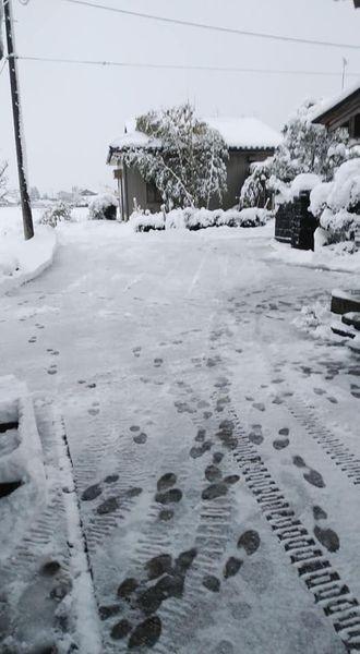2021/01/01除雪2