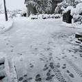 Photos: 2021/01/01除雪2