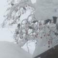 Photos: 2021/01/09豪雪