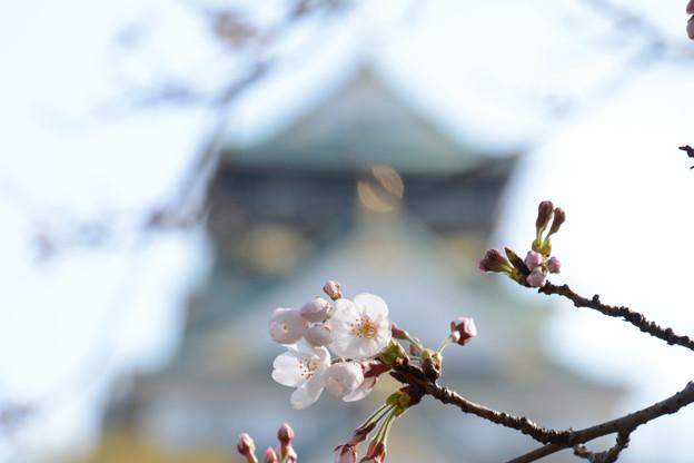 城郭にも春が来る