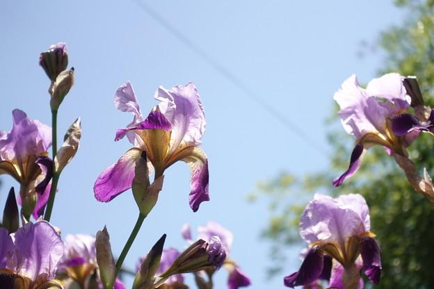 散歩道で見つけた花