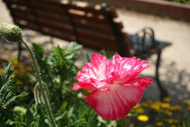 散歩道で見つけた花3