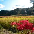 Photos: 田園の秋
