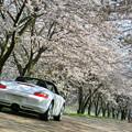 昼下がりの桜並木