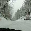写真: 木曽の雪