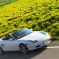 写真: 亀岡の菜の花畑