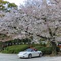 写真: 岩清水八幡宮駐車場
