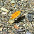 写真: 宙に浮く落ち葉