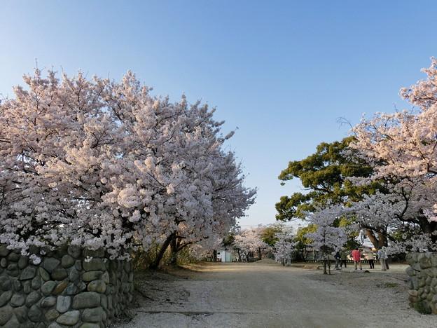田村神社参道