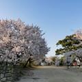 写真: 田村神社参道