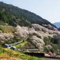 写真: ひょうたん桜の山
