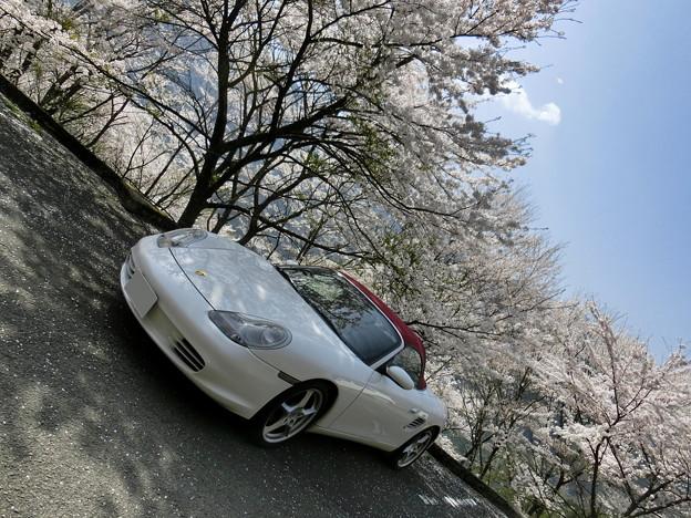 Photos: ひょうたん桜の駐車場