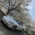 写真: ひょうたん桜の駐車場
