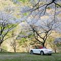 写真: 桜の広場