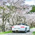 写真: 京北の桜並木