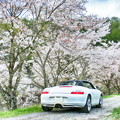 Photos: 京北の桜並木