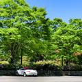 紀伊半島森林植物公園駐車場