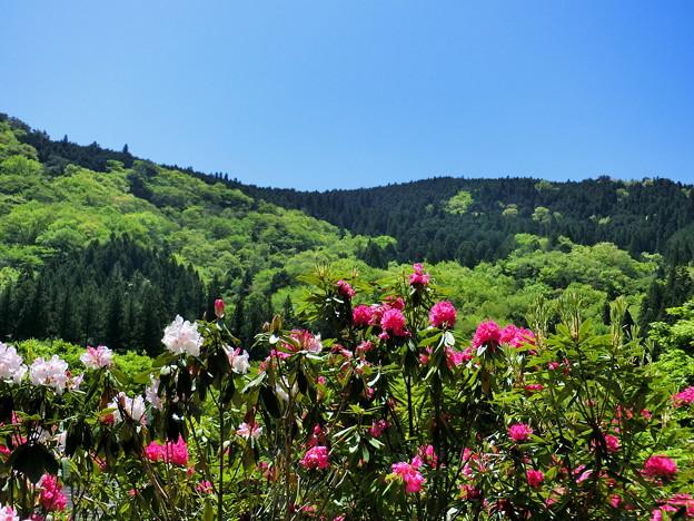 紀伊半島森林植物公園