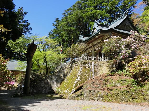 春の玉置神社