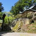 写真: 春の玉置神社