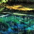 写真: 神の子池2