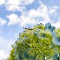 写真: 飛び立つ夢
