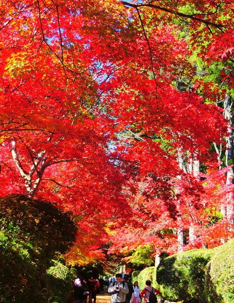 Photos: 紅葉の滝