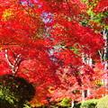 写真: 紅葉の滝